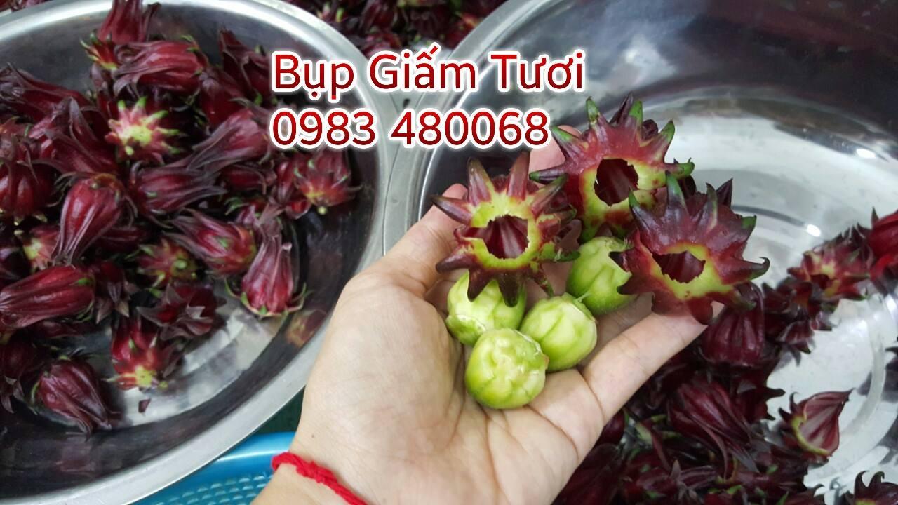 chuyen cung cap hoa bup giam, hibiscus, atiso do tai HCM, Sai Gon