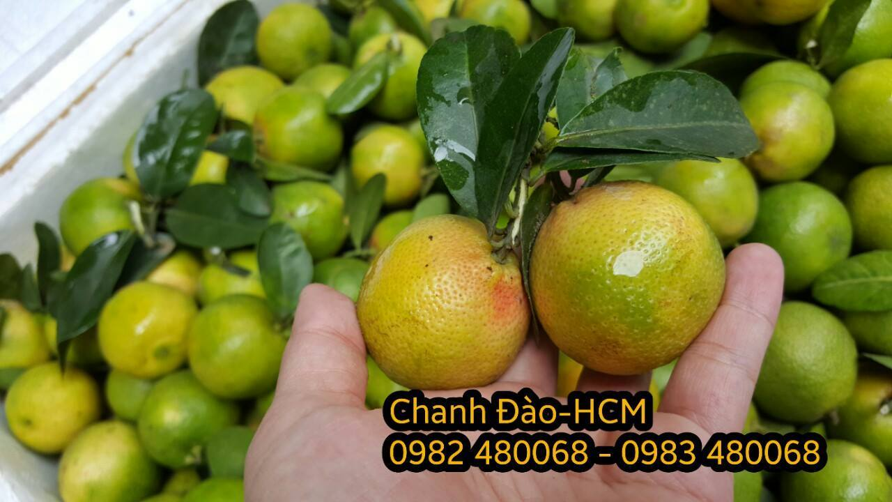 Cung Cấp Chanh Đào Tươi tại Hồ Chí Minh - 3