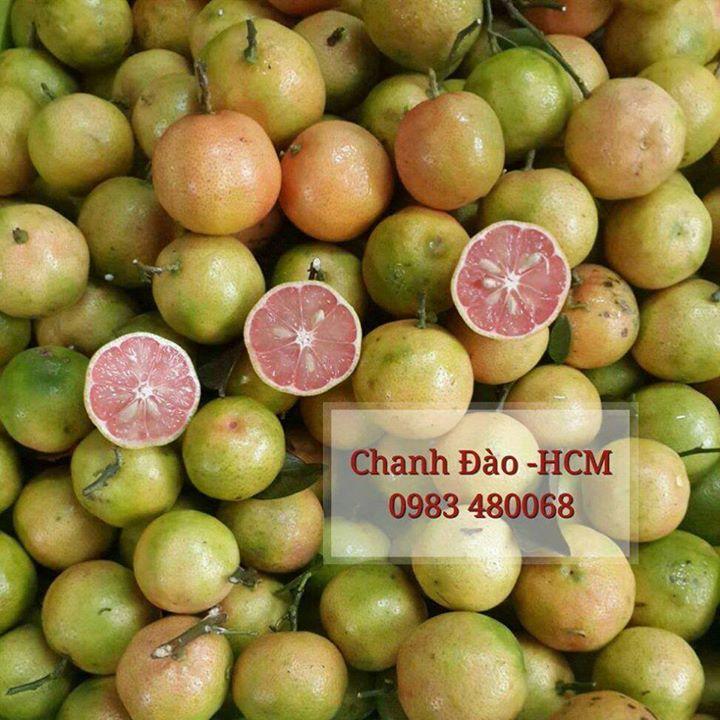 Cung Cấp Chanh Đào Tươi tại Hồ Chí Minh - 2